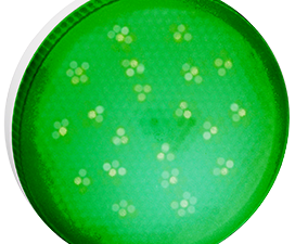 Ecola GX53   LED color  8,0W Tablet 220V Green Зеленый матовое стекло (композит) 28×74